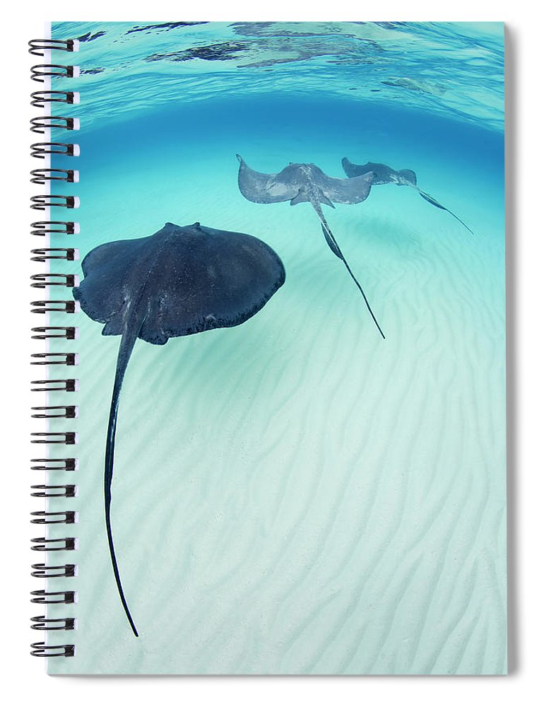 Underwater Spiral Notebook featuring the photograph Southern Stingray Cayman Isalnds by Justin Lewis