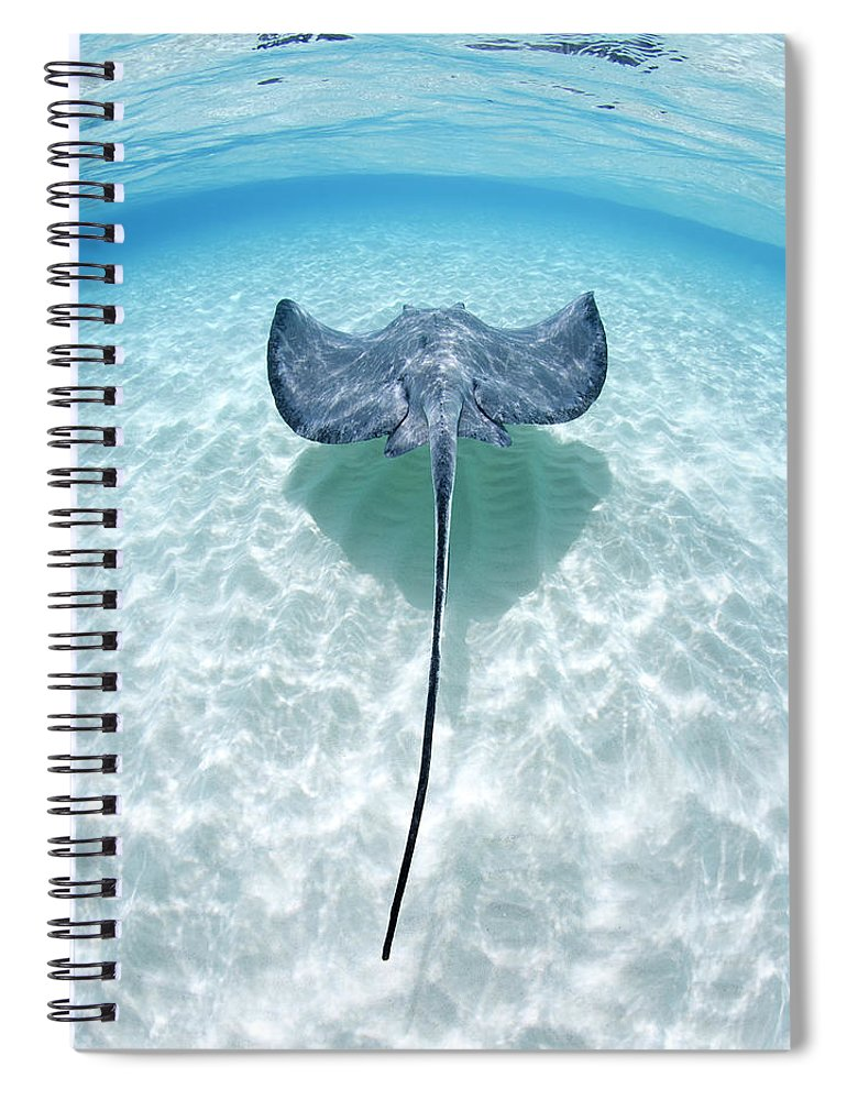 Underwater Spiral Notebook featuring the photograph Southern Stingray Cayman Islands by Justin Lewis