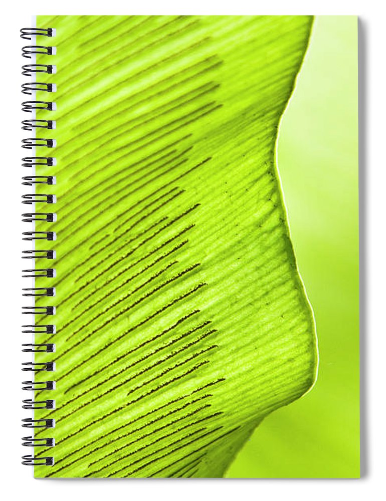 Outdoors Spiral Notebook featuring the photograph Spores Of A Fern by By Ken Ilio