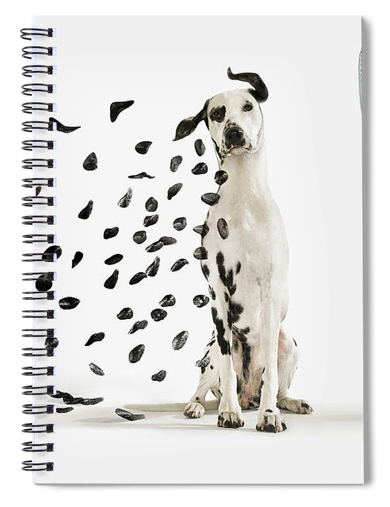 Pets Spiral Notebook featuring the photograph Spots Flying Off Dalmation Dog by Gandee Vasan