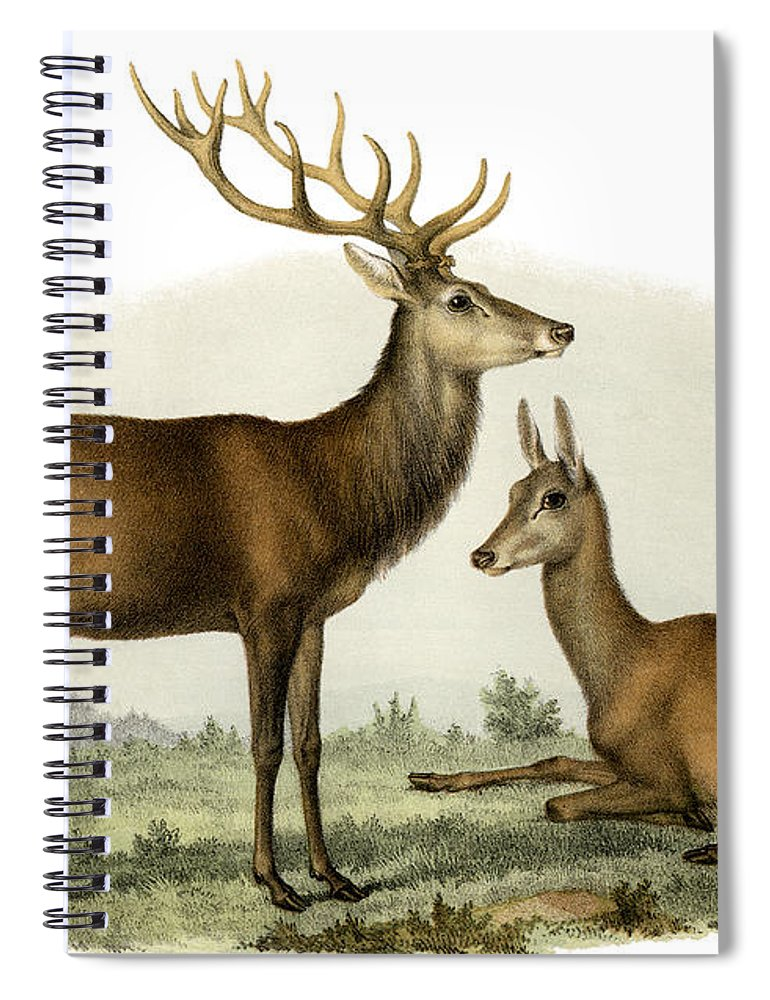 Stag Spiral Notebook featuring the painting Stag, 1860 by German School
