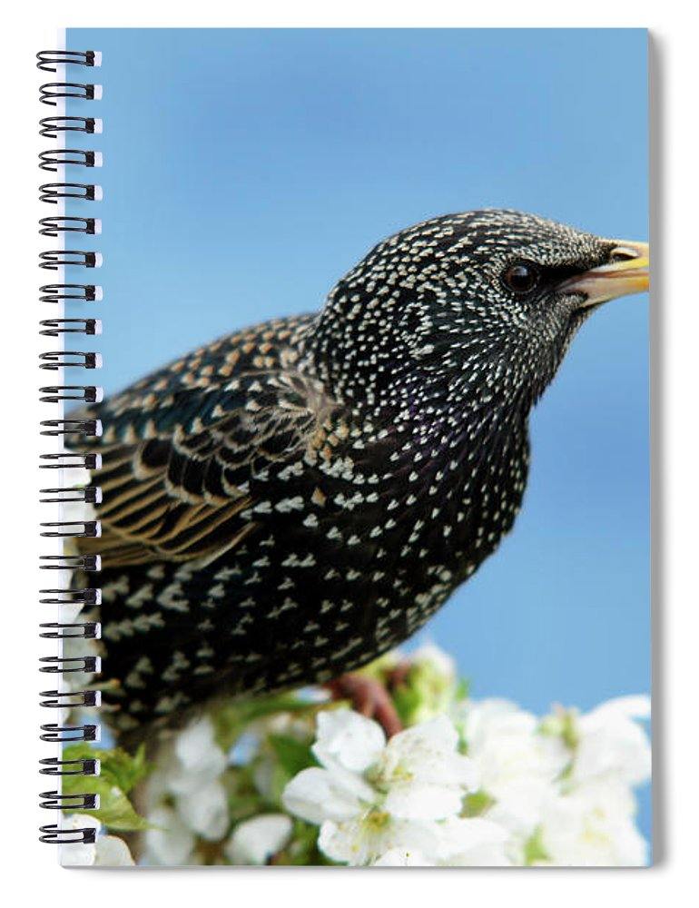 Songbird Spiral Notebook featuring the photograph Star In Springtime by Schnuddel
