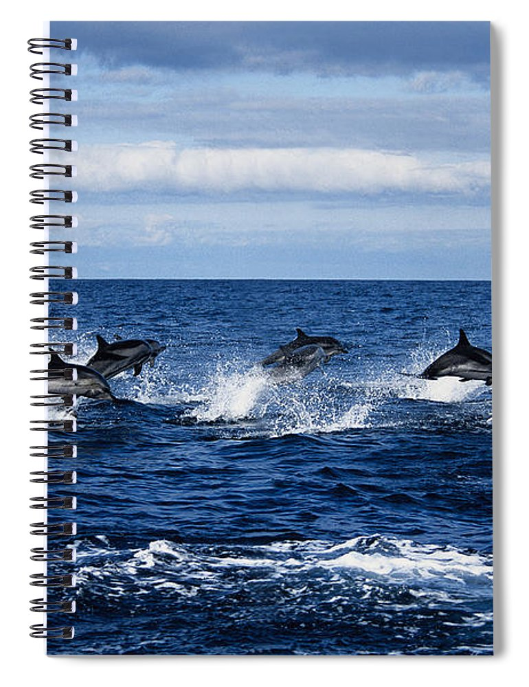 Spray Spiral Notebook featuring the photograph Striped Dolphin,stenella Coeruleoalba by Gerard Soury