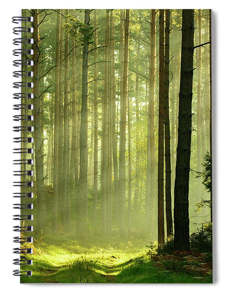 Scenics Spiral Notebook featuring the photograph Sunbeams Breaking Through Pine Tree by Avtg