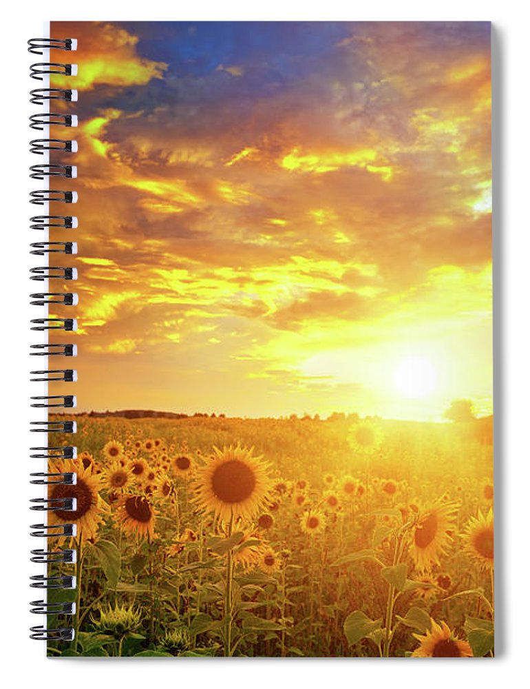 Scenics Spiral Notebook featuring the photograph Sunflowers Field And Sunset Sky by Avalon studio
