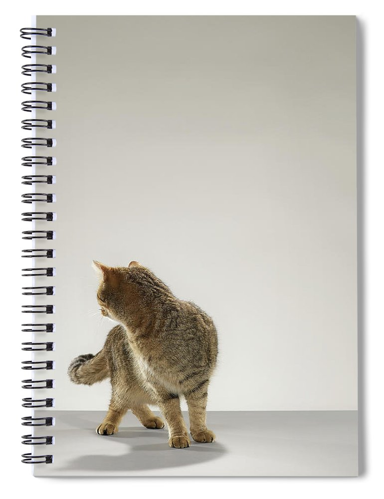 Pets Spiral Notebook featuring the photograph Tabby Cat Looking Behind by Michael Blann