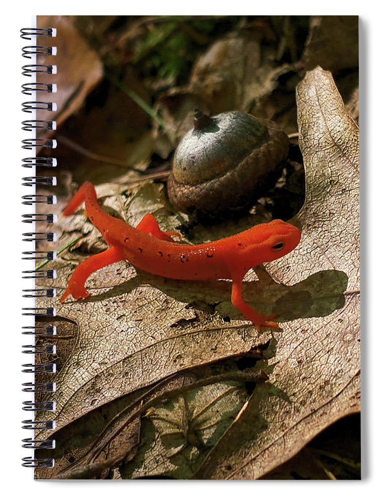 Acorn Spiral Notebook featuring the photograph The Efts Progress by Jerry LoFaro