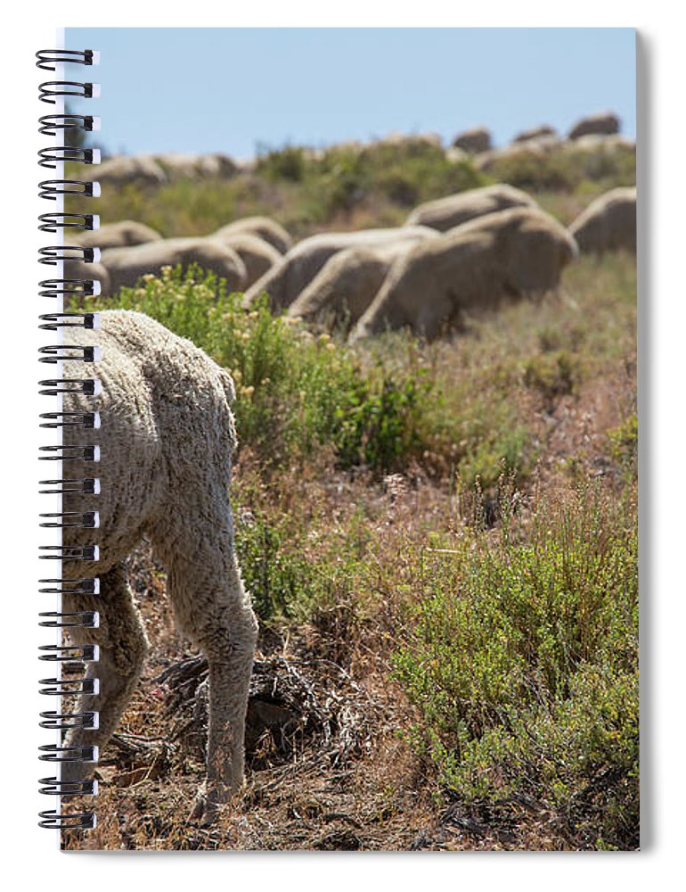 Sheep Spiral Notebook featuring the photograph The Flock by Fred DeSousa