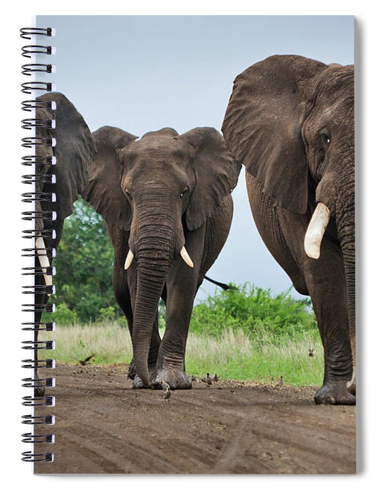 Toughness Spiral Notebook featuring the photograph Three Big Elephants On A Dirt Road by Johansjolander