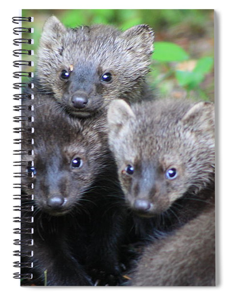 Three Fisher Cat Kits Spiral Notebook For Sale By Bruce Small