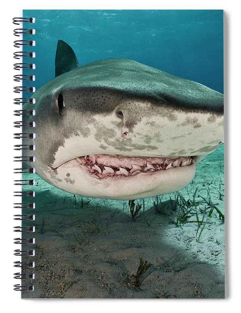 Underwater Spiral Notebook featuring the photograph Tiger Sharks Galeocerdo Cuvier Are by Rodrigo Friscione