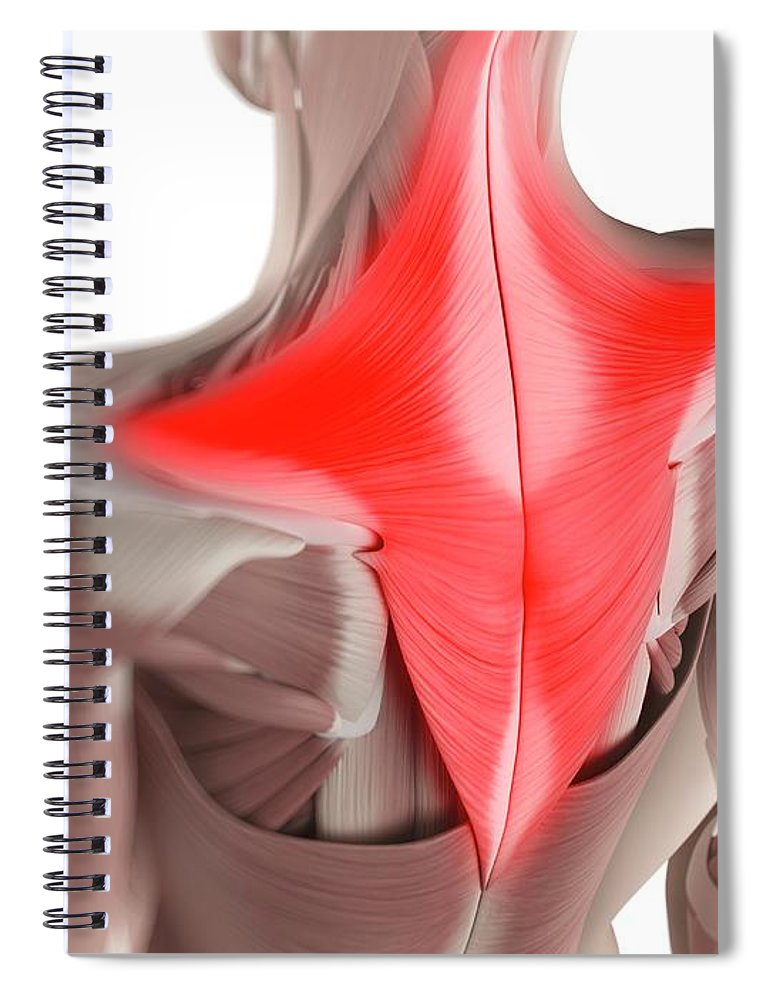 White Background Spiral Notebook featuring the digital art Trapezius Muscle, Artwork by Sciepro