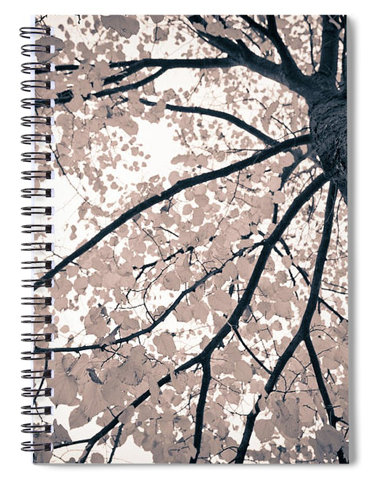 Spray Spiral Notebook featuring the photograph Tree Branches by Gianlucabartoli