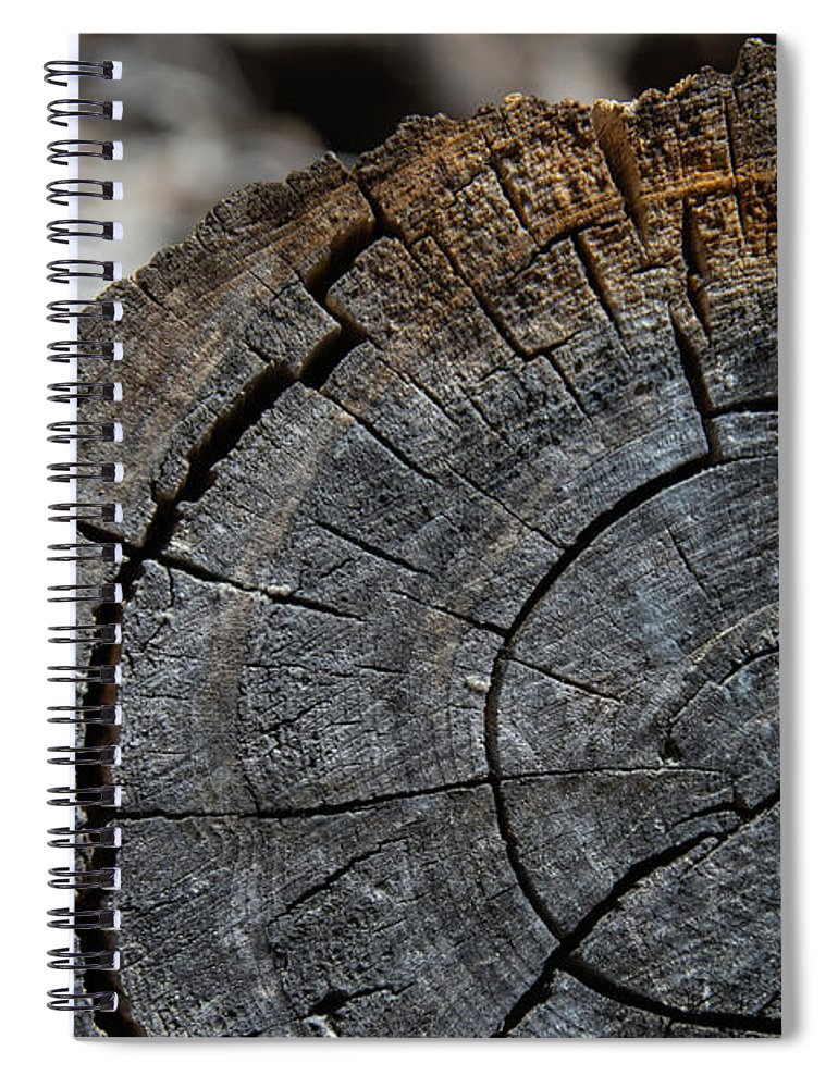 Tree Rings Spiral Notebook featuring the photograph Tree Rings by Fred DeSousa