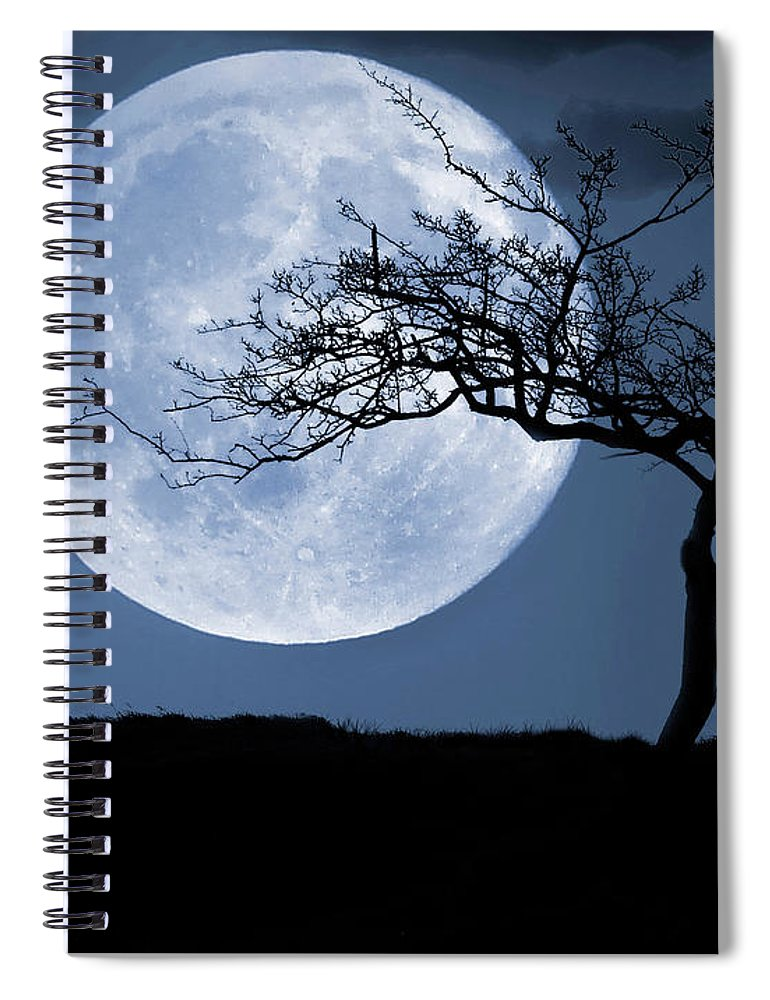 Scenics Spiral Notebook featuring the photograph Treelight by Victor Walsh Photography