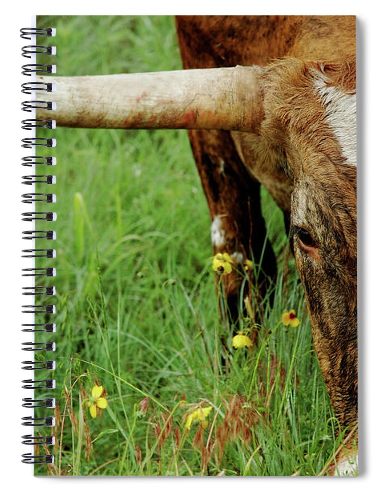 Horned Spiral Notebook featuring the photograph True Texas Longhorn by Flashpoint