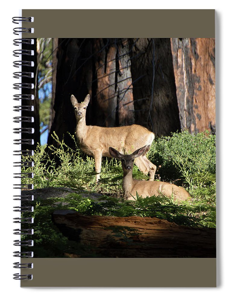 Deer Spiral Notebook featuring the photograph Two Deer by Carly Creley