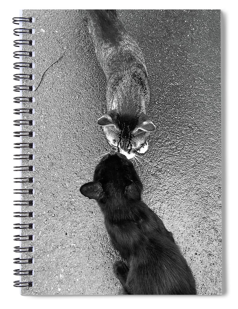Pets Spiral Notebook featuring the photograph Two Kittens Which Kiss by Photographer, Loves Art, Lives In Kyoto