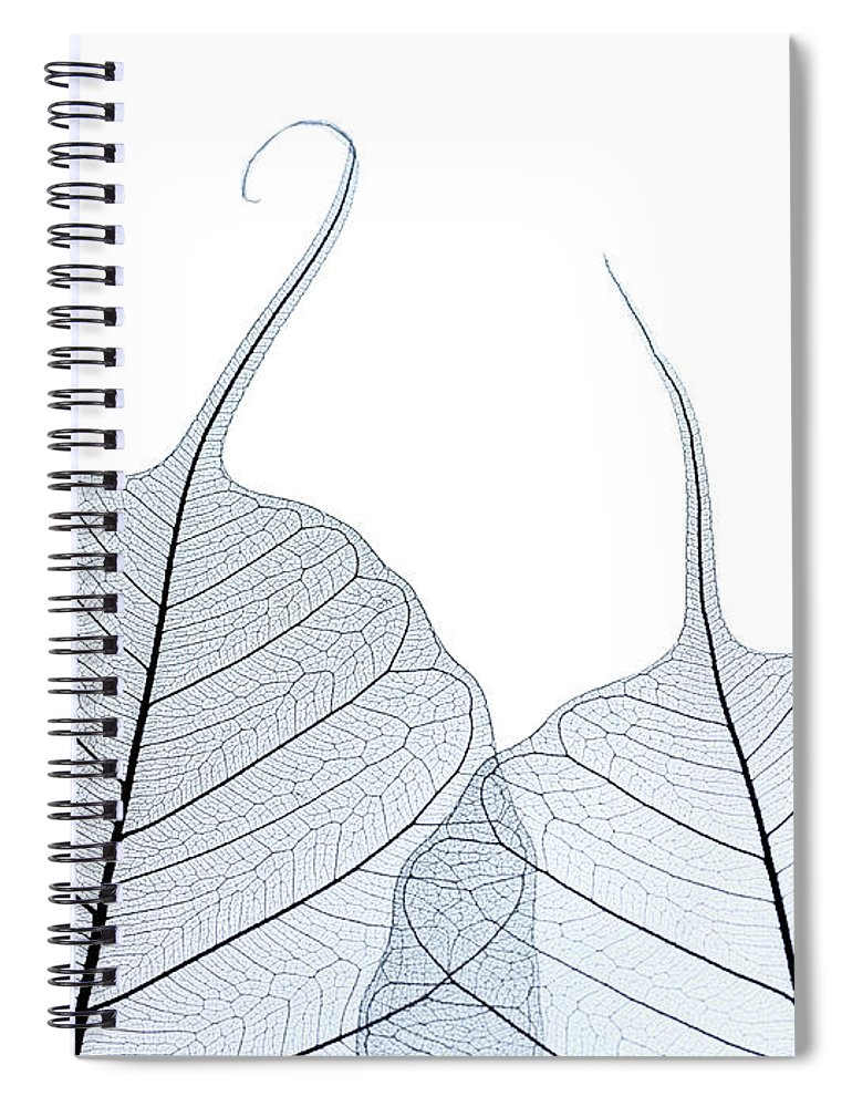 Tranquility Spiral Notebook featuring the photograph Two Leaf Skeletons by Peter Dazeley