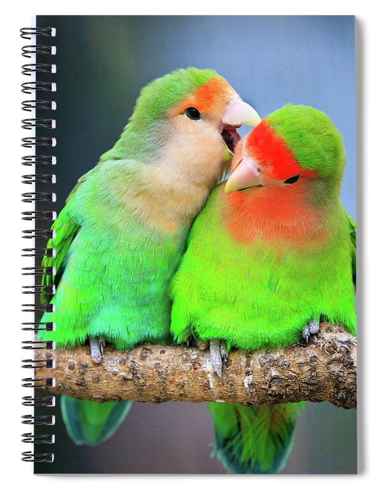 Togetherness Spiral Notebook featuring the photograph Two Peace-faced Lovebird by Feng Wei Photography