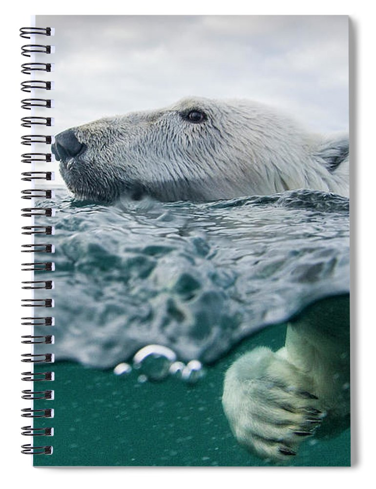 Paw Spiral Notebook featuring the photograph Underwater Polar Bear In Hudson Bay by Paul Souders