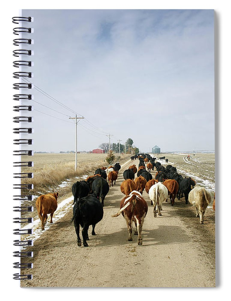 Cattle Drive Spiral Notebook featuring the photograph Usa, Nebraska, Great Plains, Herd Of by John Kelly