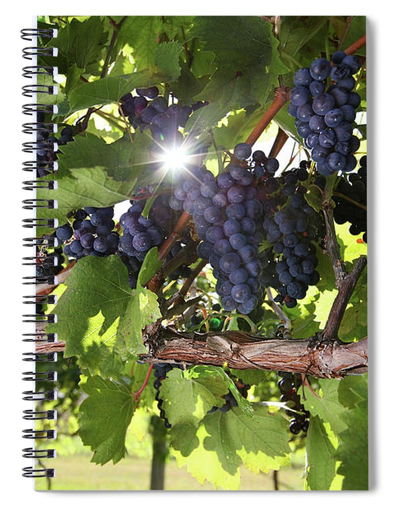 Scenics Spiral Notebook featuring the photograph Vineyard Wine Grapes by Georgepeters