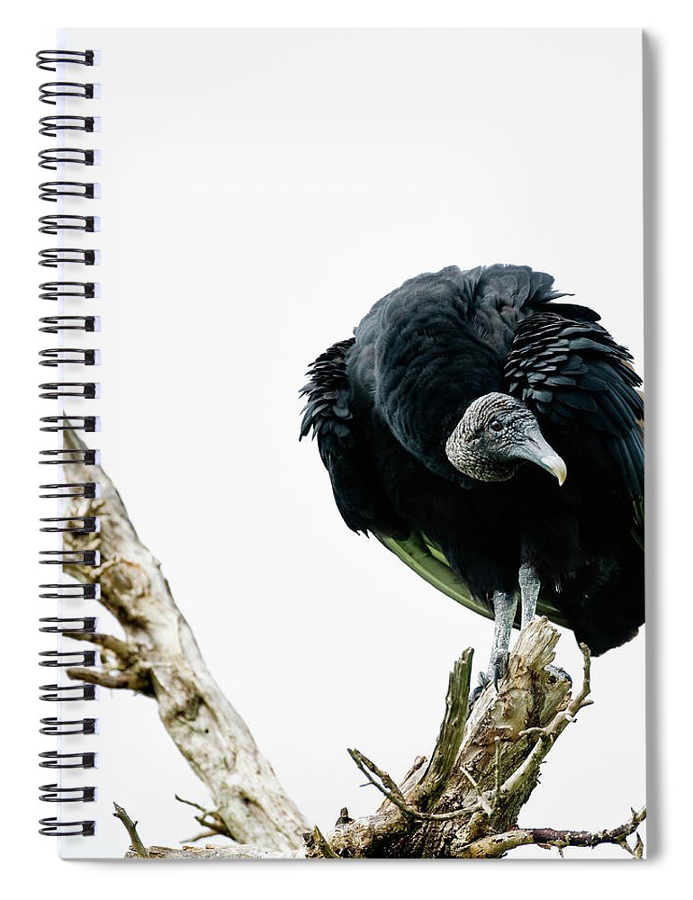 Animal Themes Spiral Notebook featuring the photograph Vulture Perched On Tree by Roine Magnusson