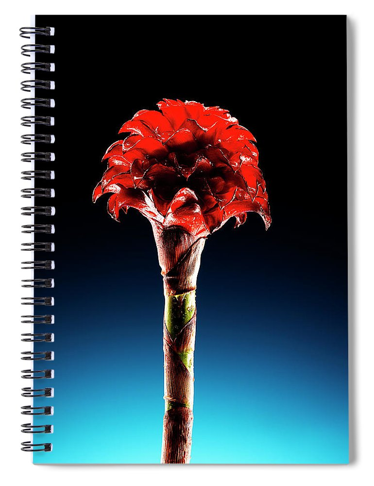 Single Object Spiral Notebook featuring the photograph Wax Ginger Flower by Chris Stein