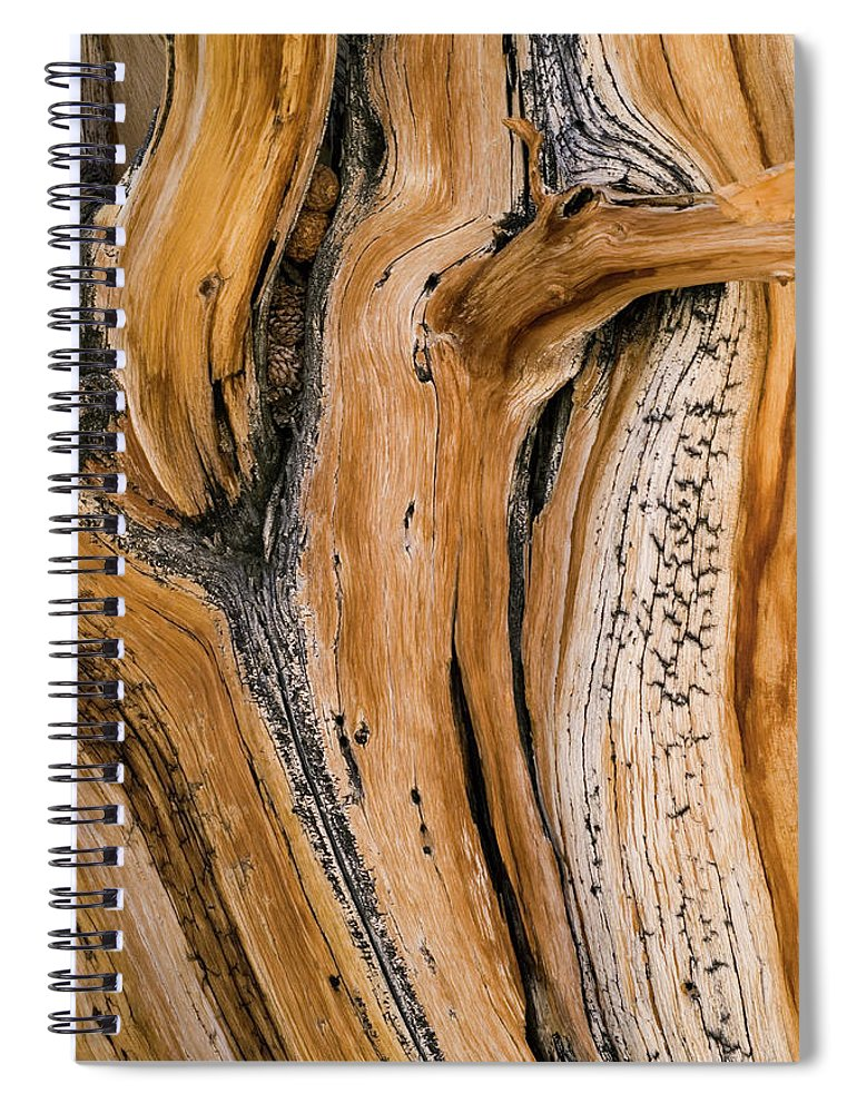 Weathered Spiral Notebook featuring the photograph Weathered Wood Of Ancient Bristlecone by Kevin Schafer