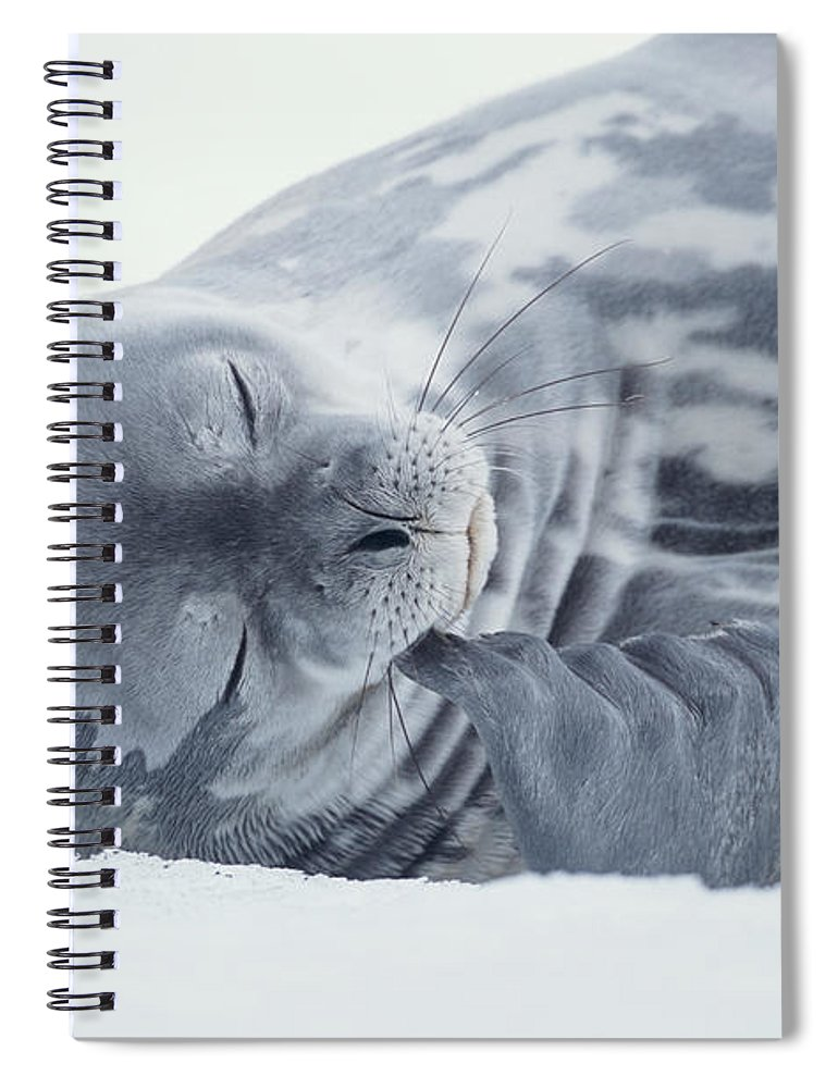 One Animal Spiral Notebook featuring the photograph Weddell Seal Leptonychotes Weddellii by Eastcott Momatiuk