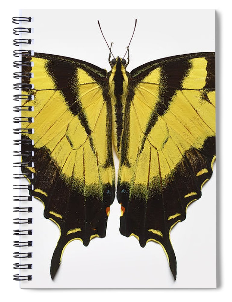 White Background Spiral Notebook featuring the photograph Western Tiger Swallowtail Butterfly by Don Farrall