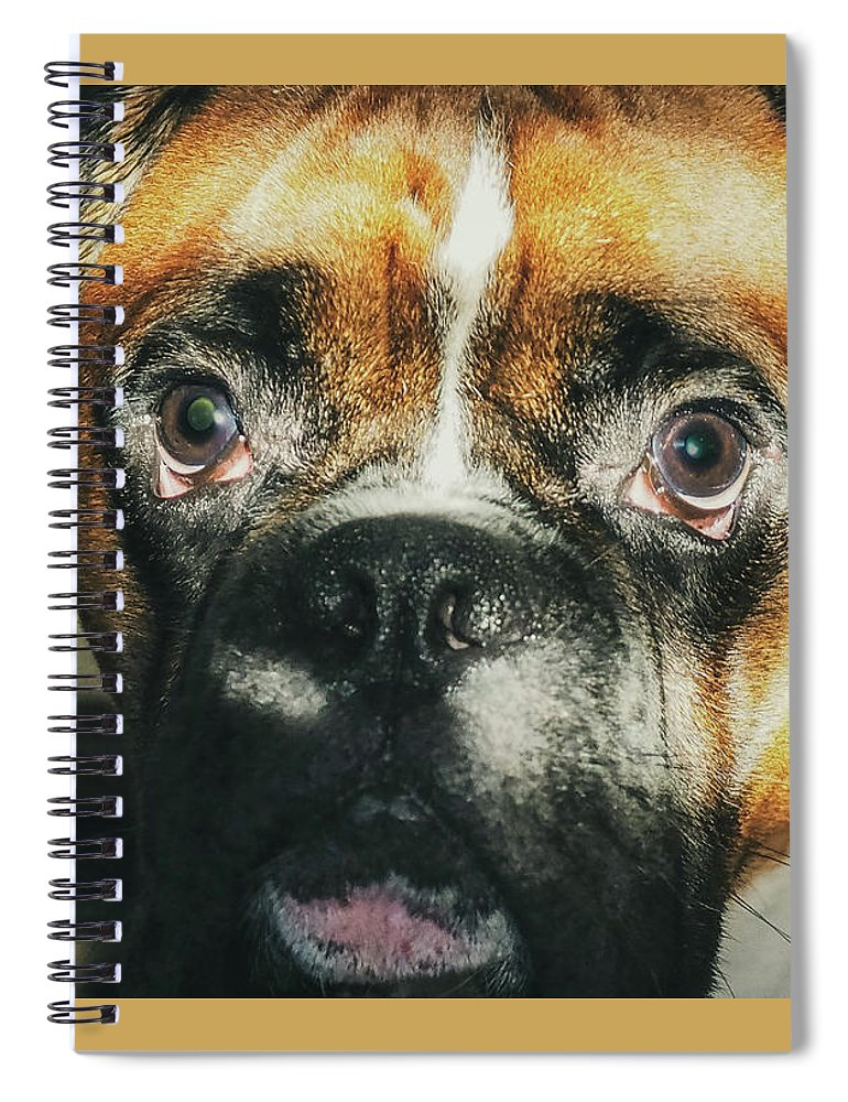 Dog Spiral Notebook featuring the photograph Where'd Everybody Go by CWinslow Shafer