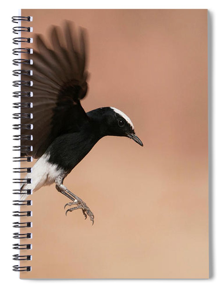 Eilat Spiral Notebook featuring the photograph White Crowned Wheatear by Dorit Bar-zakay