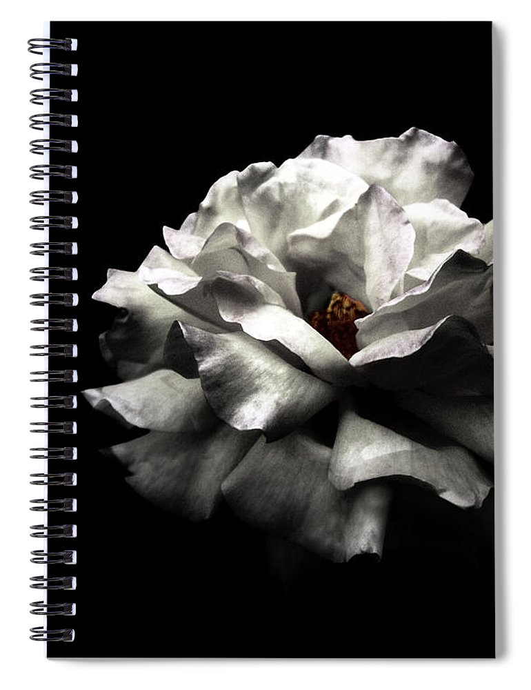 Black Background Spiral Notebook featuring the photograph White Rose by Lola L. Falantes