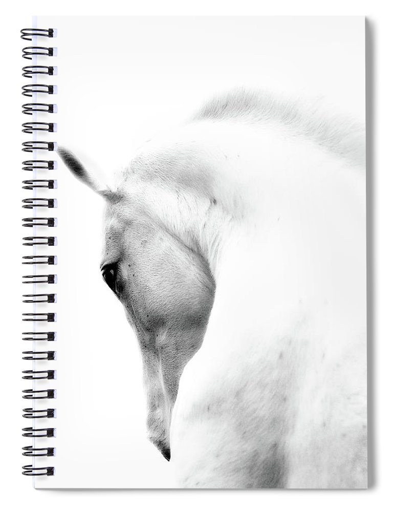 Horse Spiral Notebook featuring the photograph White Stallion Andalusian Horse Neck by 66north
