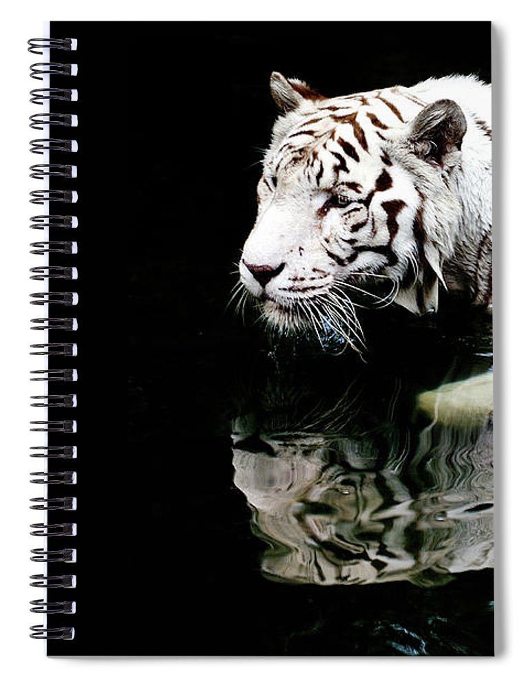Three Quarter Length Spiral Notebook featuring the photograph White Tiger In Water by Carlina Teteris