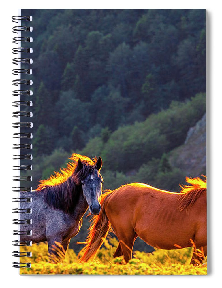 Balkan Mountains Spiral Notebook featuring the photograph Wild Horses by Evgeni Dinev