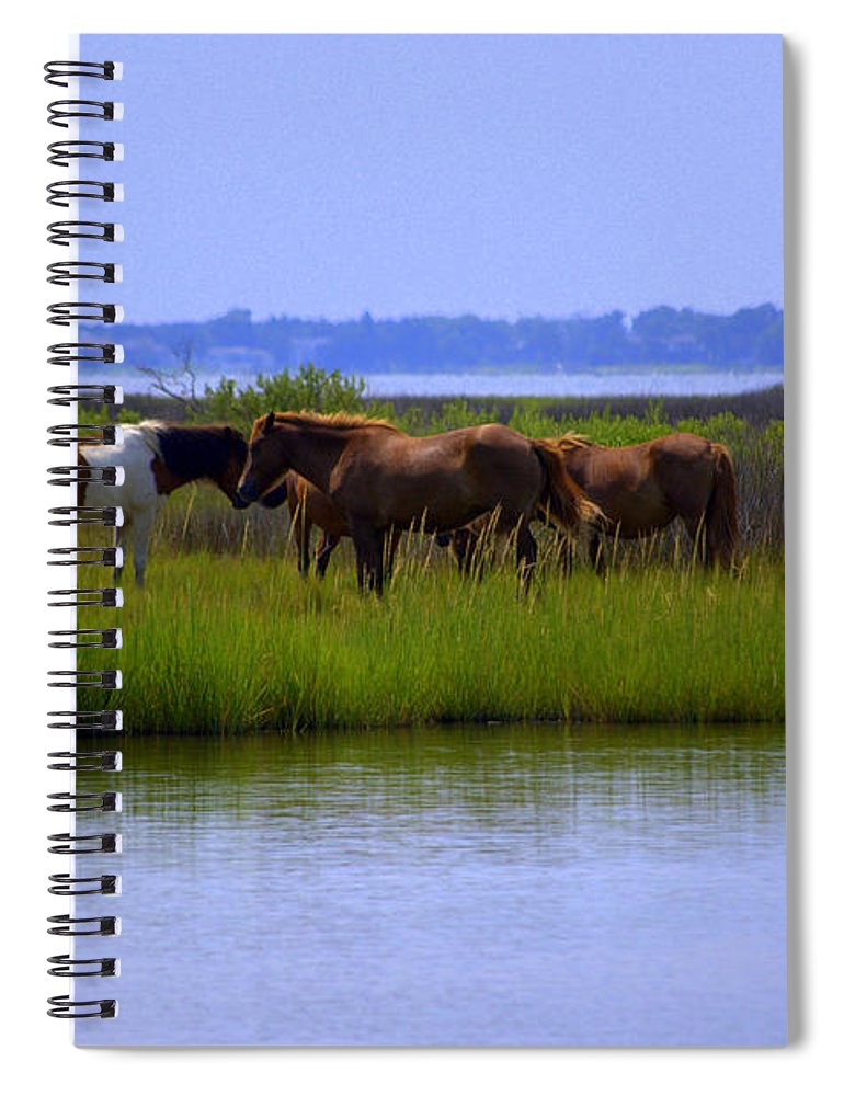 Horse Spiral Notebook featuring the photograph Wild Horses Of Assateague Island by Robin Houde Photography