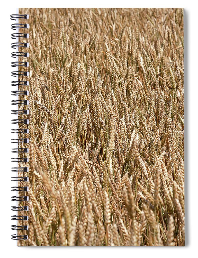Field Spiral Notebook featuring the photograph Wonderful Wheat by Todd Klassy