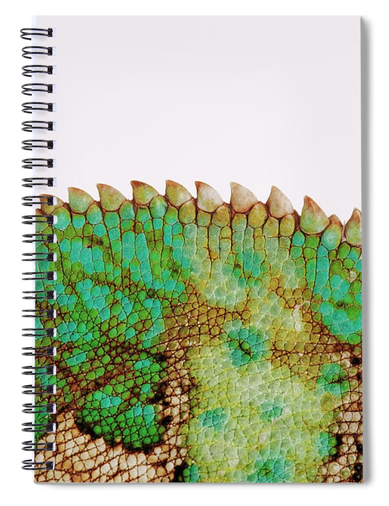 White Background Spiral Notebook featuring the photograph Yemen Chameleon, Close-up Of Skin by Martin Harvey