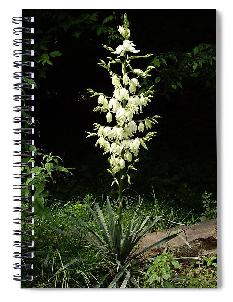Yucca Spiral Notebook featuring the photograph Yucca Blossoms by Nancy Ayanna Wyatt