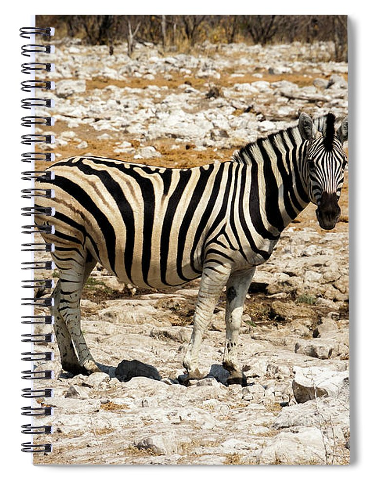 Animal Themes Spiral Notebook featuring the photograph Zebra And White Rocks by Taken By Chrbhm