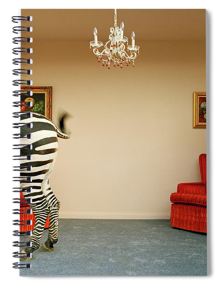 Out Of Context Spiral Notebook featuring the photograph Zebra In Living Room Swishing Tail by Matthias Clamer
