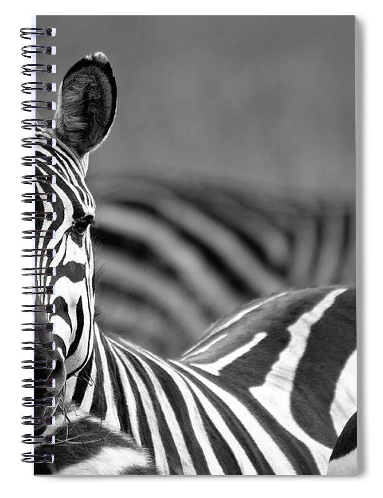 Plains Zebra Spiral Notebook featuring the photograph Zebra by Wldavies