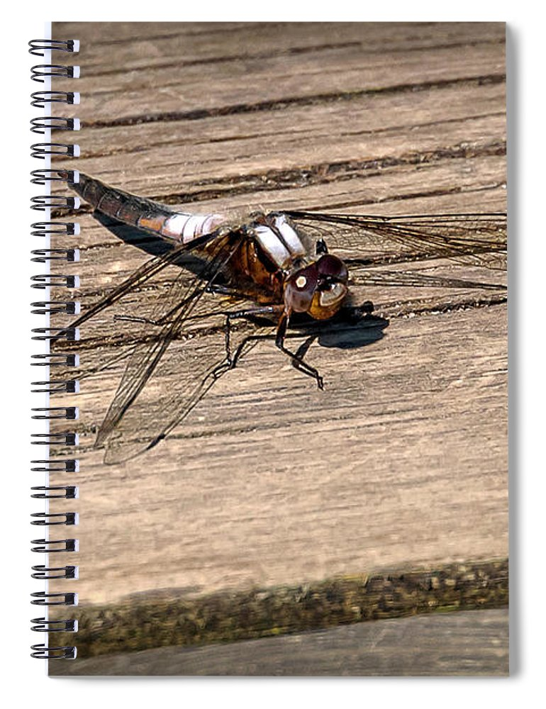 Insects Spiral Notebook featuring the photograph 20-0609-0227 by Anthony Roma