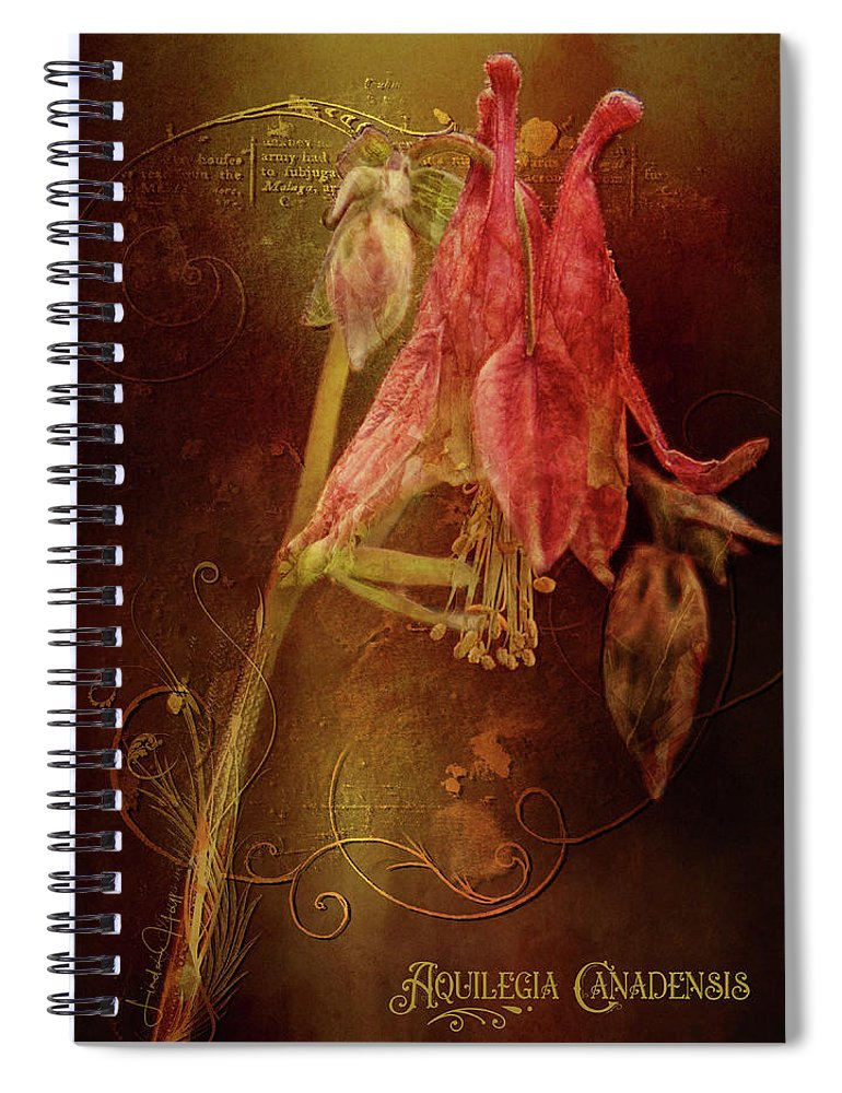 Flower Spiral Notebook featuring the digital art Aquilegia Canadensis by Linda Lee Hall