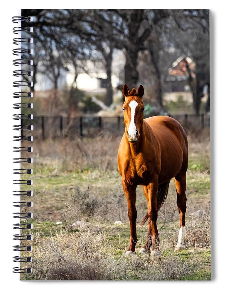 Horse Spiral Notebook featuring the photograph Bay Horse 3 by C Winslow Shafer