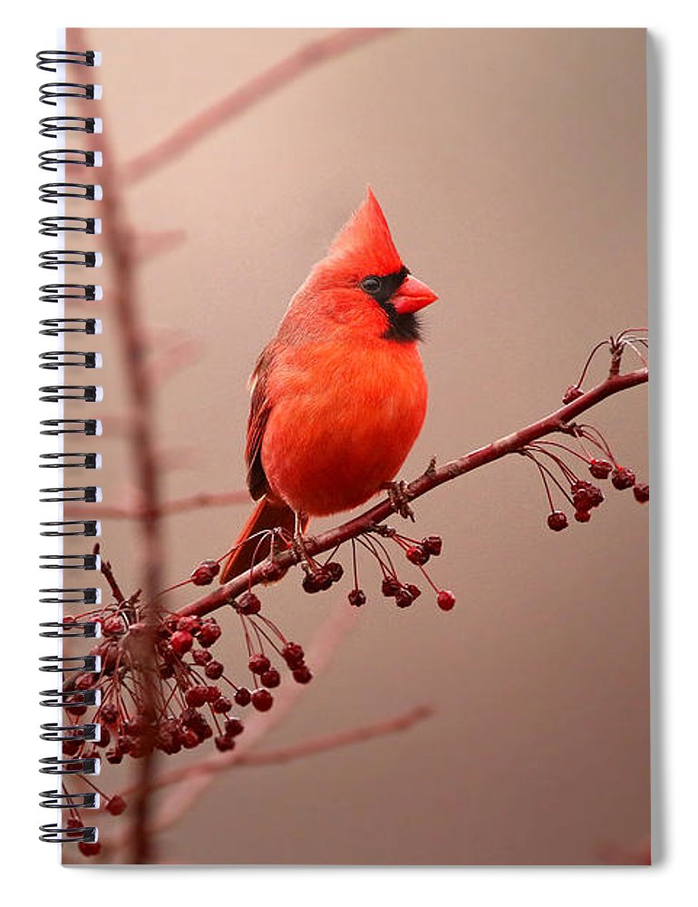 Cardinal Spiral Notebook featuring the photograph Bold Beauty by Rob Blair
