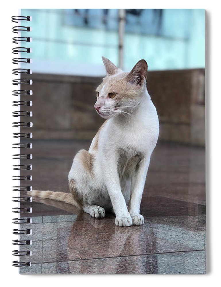 Wallpaper Spiral Notebook featuring the photograph Cat Sitting On Marble Floor by Prashant Dalal